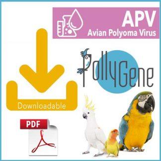 Avian Pollyomavirus APV - Pollygene